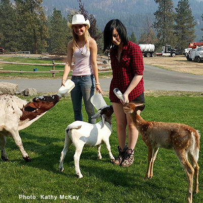 Girls feeding baby calf, goat, and deer.  K-Diamond-K Guest Ranch.