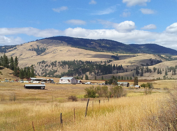 View of the grass-covered hills along Hwy 21 just outside of Curlew, WA.