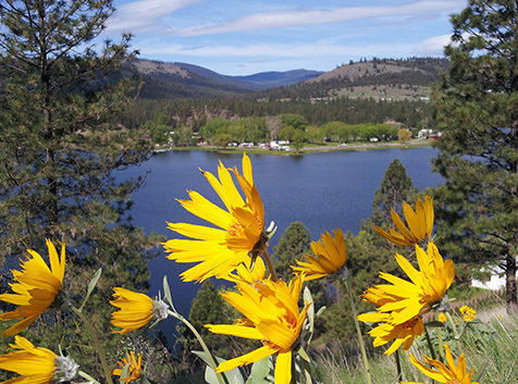 Yellow flowers with Curlew Lake in background.